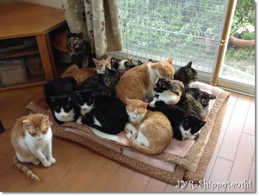 猫 の 多頭 飼い 猫の多頭飼育!崩壊を防ぐ活動 –