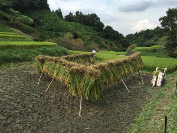 農家さんの背中