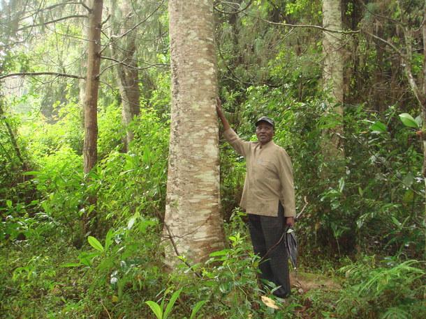 これまでの村人達の植林によってキリマンジャロ山に蘇った森