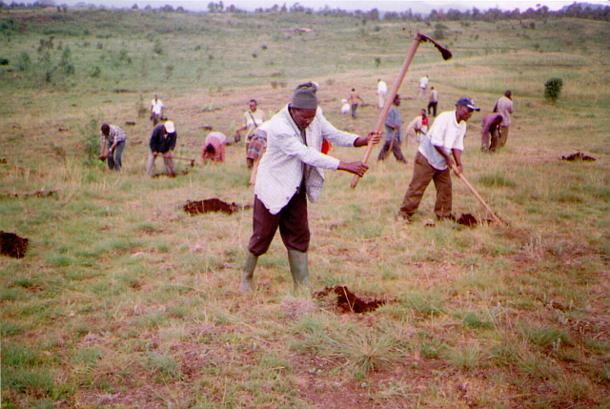 キリマンジャロ山の尾根に広大に広がる、かつての政府の森林プランテーション跡地。村人たちはこの写真のように、こうした裸地をすべて森林を回復しようと、植林に取り組んできました。しかしこうした村人たちによる環境保全活動は、国立公園では違法行為として禁止されました。