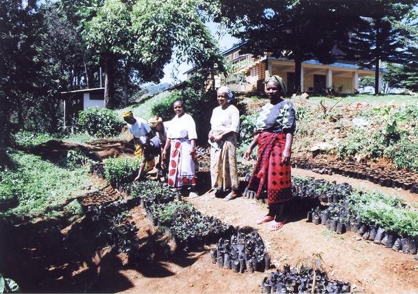 キリマンジャロ山で植林に取り組んでいるママさんたちの苗畑