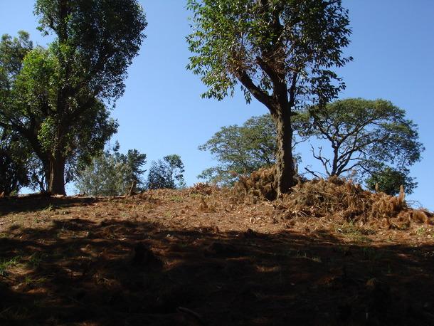 国立公園公社によって伐採された「エデンの森」の境界