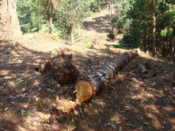国立公園公社によって森林を伐採し造成された分断ライン