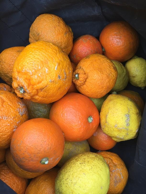 周防大島の晩柑、ポンカン、橙、レモン