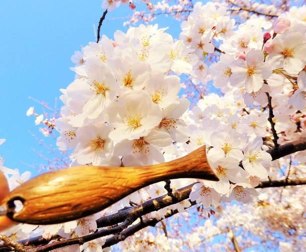 これから桜の季節ですね(写真は一昨年撮影したものです))