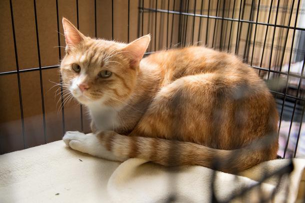 茨城県で保護猫の譲渡を受け ... - nekogohan-web.jp