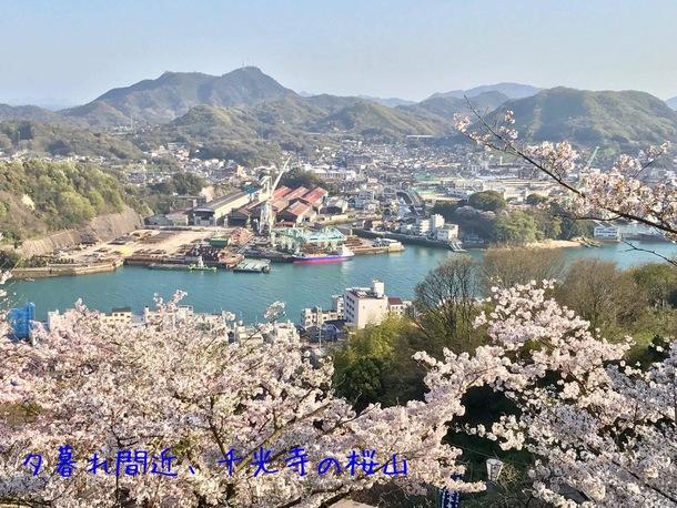 桜の季節の尾道