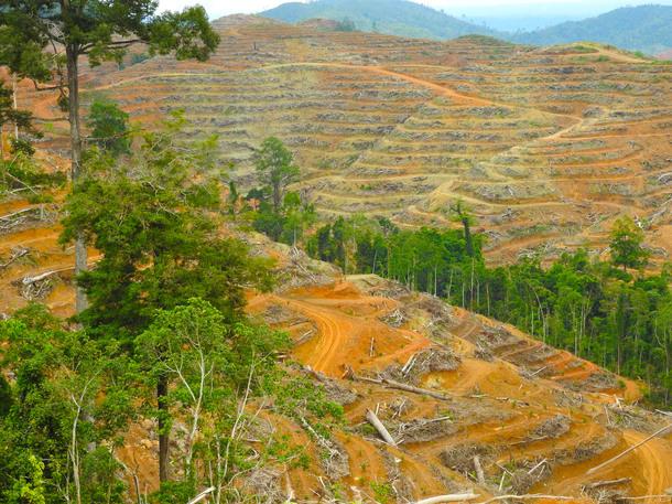 油ヤシ農園をつくるために切り開かれた森林地帯
