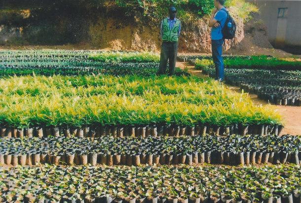 様々な村の苗畑で苗木が育てられました