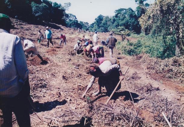 キリマンジャロ国立公園に広がる多くの裸地で40の村々が連携して植林に取り組みました
