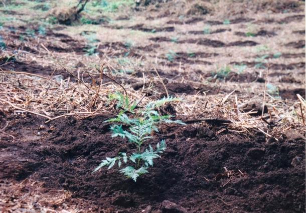 """""""エデンの森"""" に植えられたたくさんの苗木"""