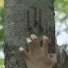 Thumb dcdfd41cb6e96e78736deb5f5add6f6311da8e80