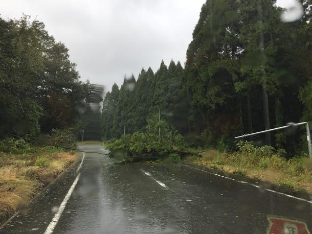 台風の影響で、倒木①