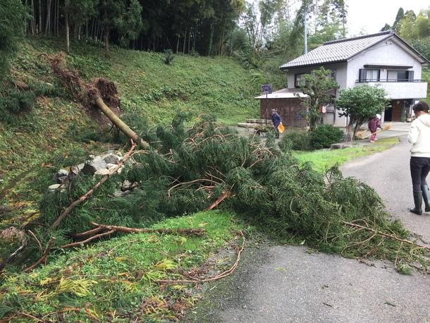 台風の影響で、倒木④