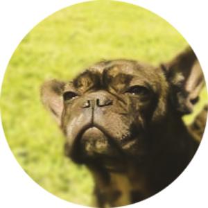OSAMU 犬 画像