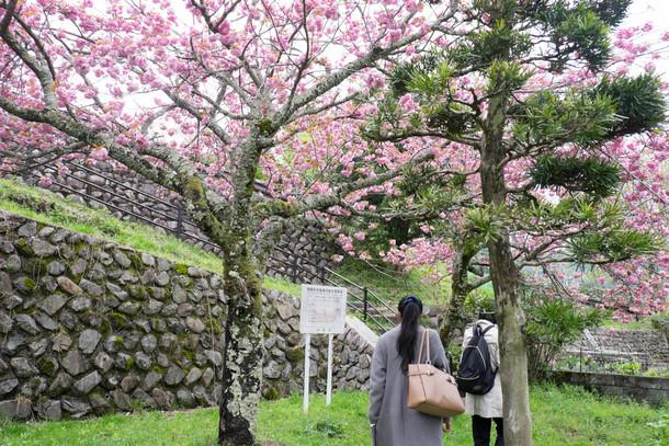 八重桜とメンバー