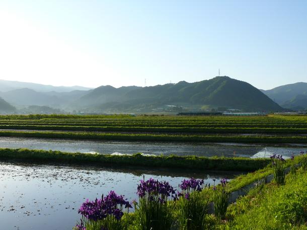 上山市牧野から呑岡山を望む