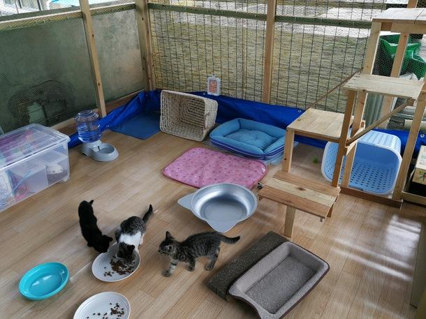 自宅に作った屋外型保護猫シェルター
