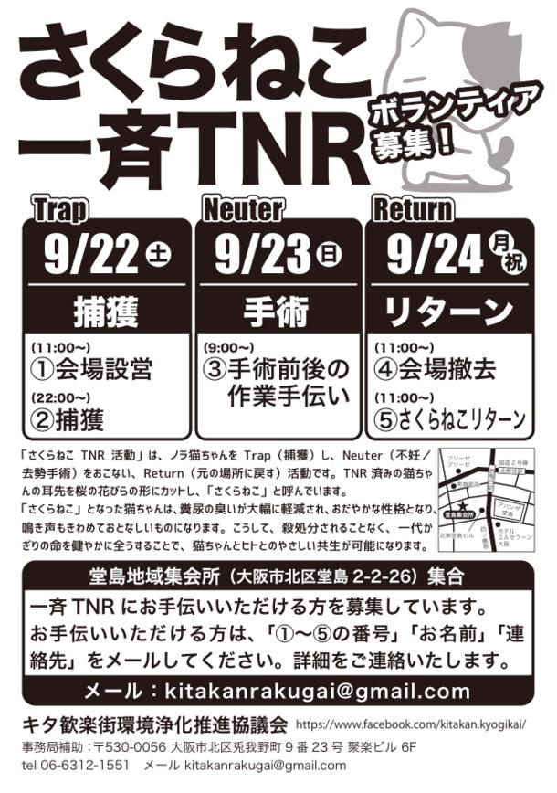 さくらねこ一斉TNR