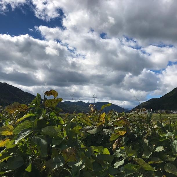 大豆畑の空
