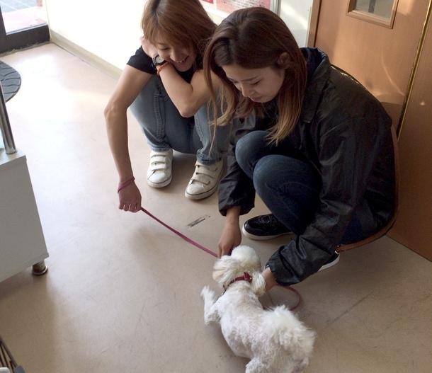 スタッフは犬を愛しています