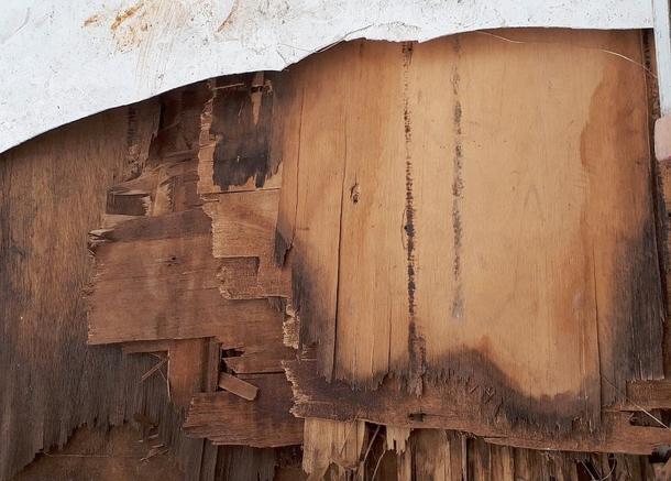 はがした屋根の下は、ボロボロのベニヤ板