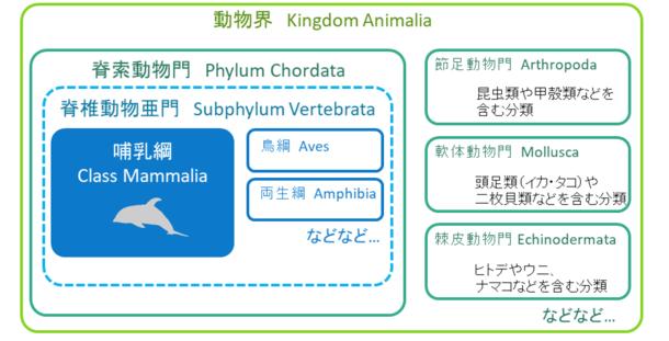 くじら小話:鯨類の分類について 突如、八丈島に現れたザトウクジラ ...