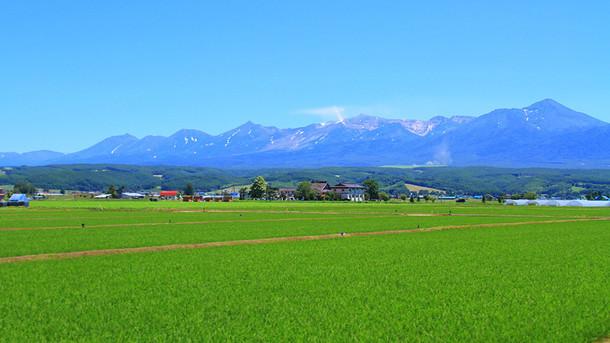 中富良野の田畑の風景写真