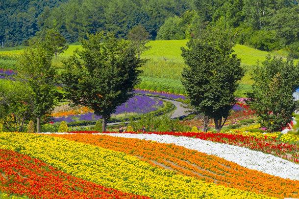 北海道の夏の風景写真