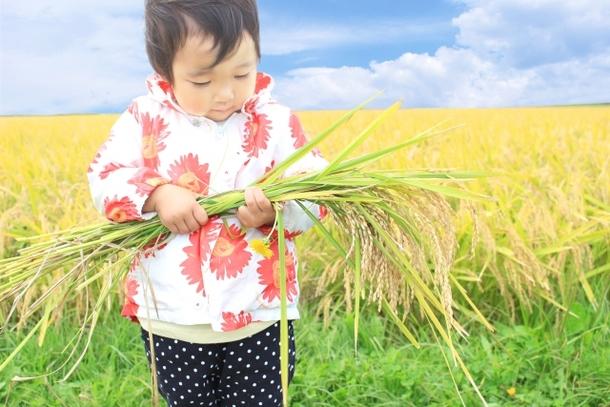 稲を抱える子供の写真 byガイムさん