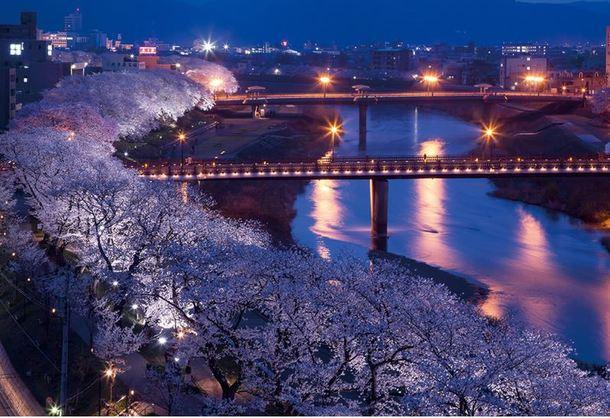 足羽川桜並木の夜景