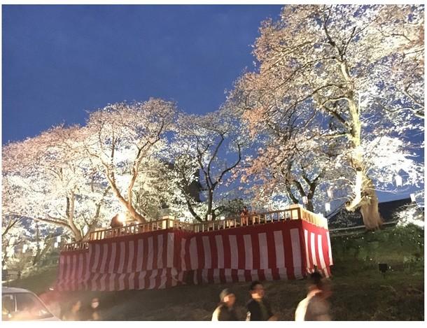 桜床の画像