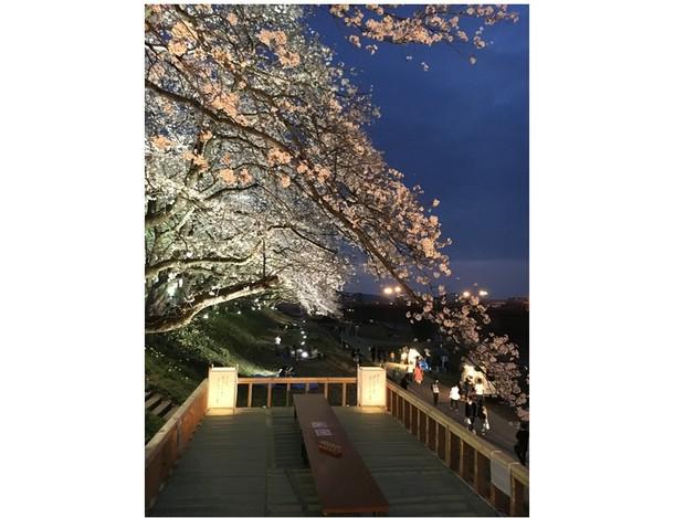 桜床の中から