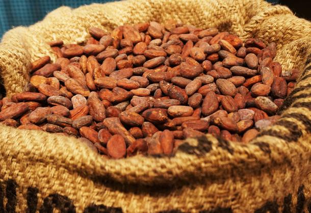 チョコレートの原材料:カカオ豆
