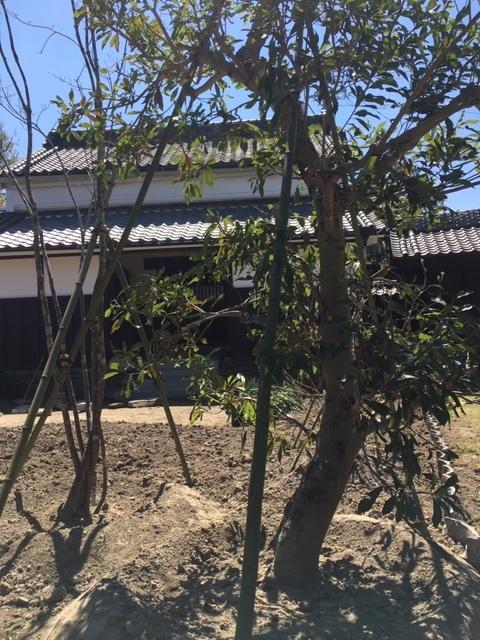 ガーデンから蔵のカフェを見る。これから植栽が始まります。