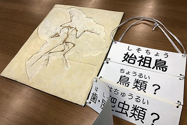 始祖鳥ベルリン標本(レプリカ)と補助教材の写真