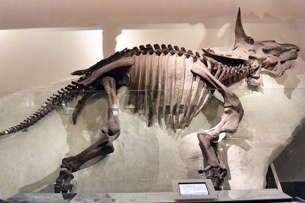 トリケラトプス全身骨格