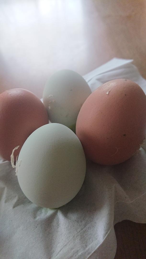 アローカナとボリスブラウンの卵