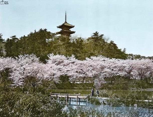 Japan芝公園