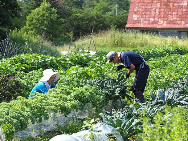 自然栽培の農作物を作っています。