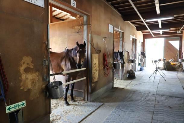 盛岡競馬場 飯田厩舎を訪問してまいりました! 引退した競走馬の馬ふん ...