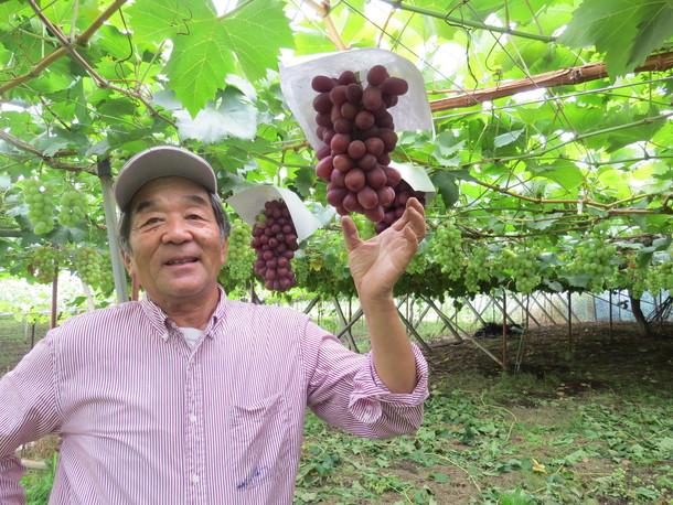阪本葡萄4