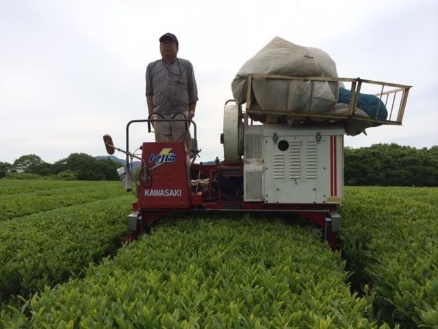 大山町 陣構茶生産組 有機栽培茶圃場にて平澤さん!