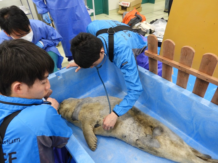 男鹿水族館診療