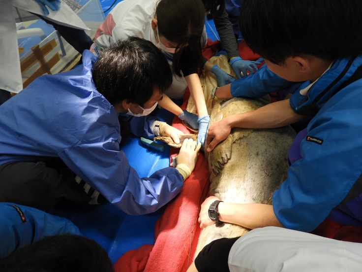 男鹿水族館診療2