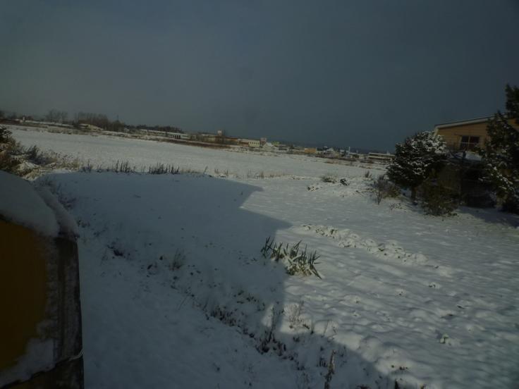 雪がつもりました