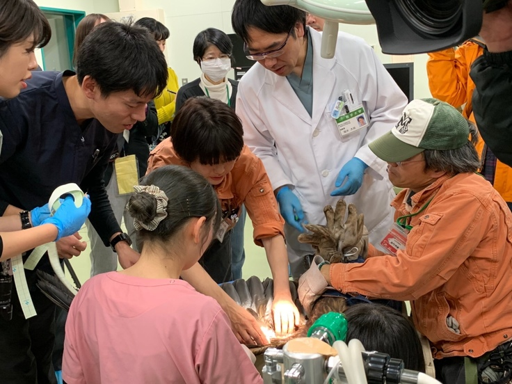 ニホンイヌワシの診療