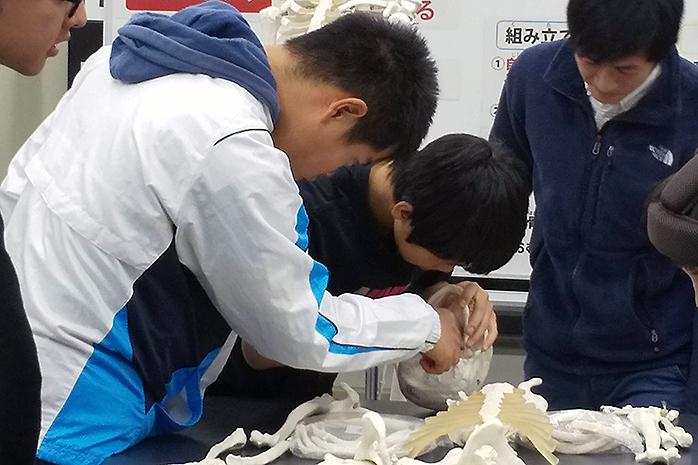 骨を組み立てている生徒さん達