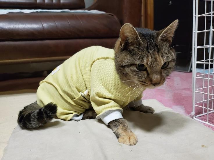 後 手術 猫 避妊