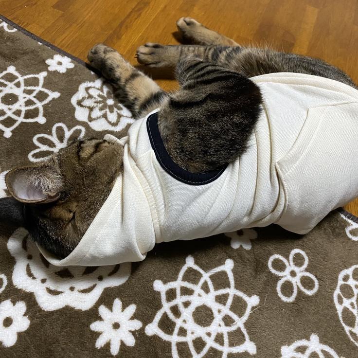 猫フーディー着用中